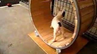 犬の面白動画 ~自走編~