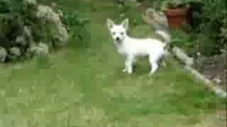 cat frightened dog 猫飛び出しに犬ビックリ!