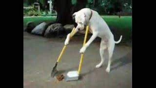 【笑】犬の面白画像集 Slideshow of Funny Dogs