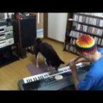 おもしろ犬~ピアノを弾く犬VOL.4~