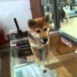 エクササイズ犬