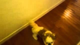 犬おもしろ動画 回る犬
