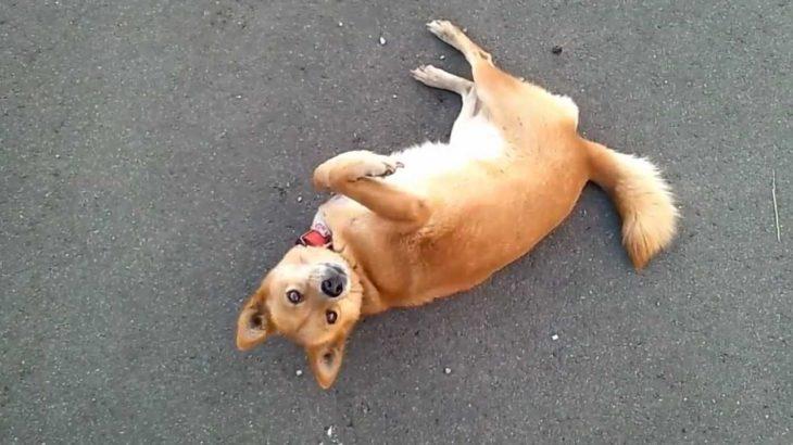 言うことを良くきく、可愛い犬 A smart and cute dog