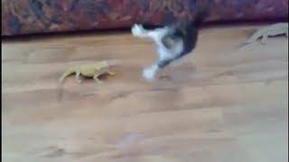 【大笑】物凄い勢いでビックリする猫ちゃん、他(猫 おもしろ動画) Goofy cats