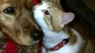 犬「ただいま~」 猫「これより猫チェックします!」 猫の日課 Cat Loves Dog