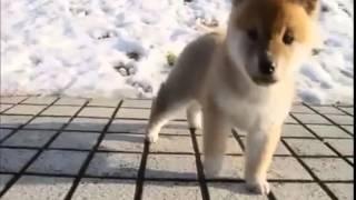 ぬいぐるみのように超可愛い子犬の動画集!癒し動画