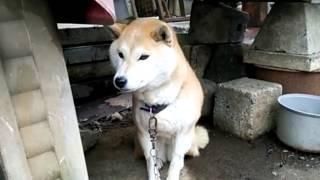 犬のシーバ君は、おとなしい犬です