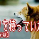 【泣ける話】帰りを待っていた犬