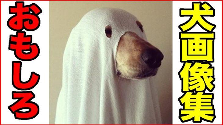 【おもしろ動物】いぬ・イヌ・犬編【爆笑画像集2】