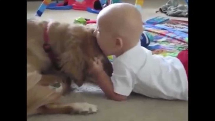 【笑える】可愛いすぎる赤ちゃんと犬の仲良しハプニング動画