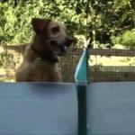 犬おもしろ『卓球が気になってしょうがないわんちゃん』可愛すぎます(笑)