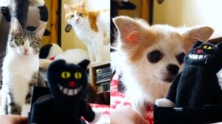 【犬猫編】びっくり箱 – A Jack In The Box |CAT & DOG –