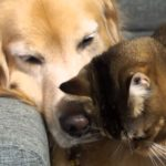 犬が大好きな猫 Cat & Dog are best friends