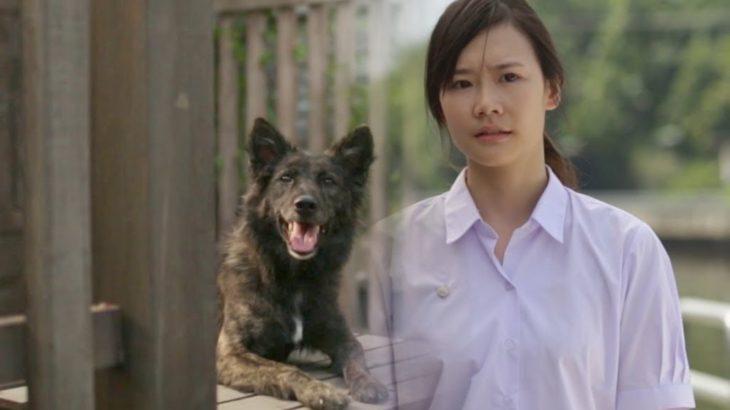 「泣ける感動」犬がもっと触ってほしいだよ。犬と飼い主の感動実話