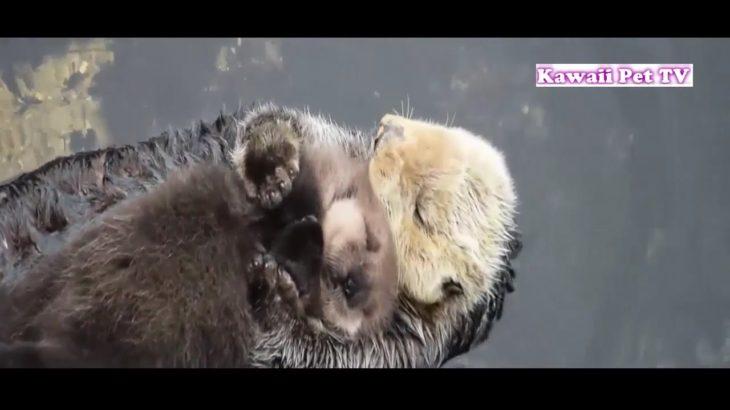 「泣けるほど感動」動物の母性本能●この動画を見たら、母性って何なんだろう分かるようになる