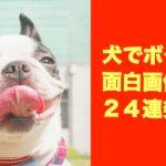 【犬でボケて】面白画像24連発