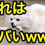 かわいい犬・子犬の面白ハプニング集【2016最新】