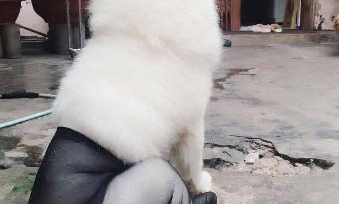 「おもしろ犬」最高におもしろ犬のハプニング 2016。思わずに笑っちゃう犬、ワンちゃん可愛くて面白すぎる 20