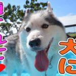 【カワイイ犬動画】フワフワワンコ、癒されます♡2016 09 03
