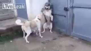 【動物の家族】子犬をびっくりさせた父に母犬が怒る!w