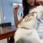 「おもしろ犬 」可愛くておもしろ犬のハプニング動画集・思わずに笑っちゃう犬の動画 #32