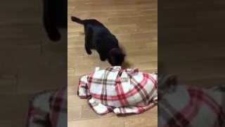 ビックリする猫 びっくりさせる犬 おもしろ動物動画