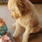 「かわいい犬」初めて人間の赤ちゃんに会った犬の反応が超面白い