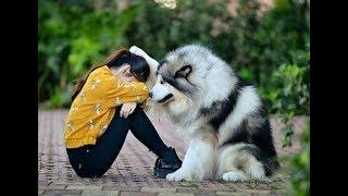 「犬の感動動画」犬はどんな時でも飼い主に寄り添っている・必死に飼い主を守る