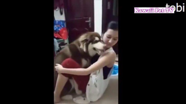 犬のごめんなさいに胸キュン・即、許したくなる・かわいいすぎる犬