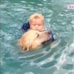 「泣けるほど感動」ご主人が溺れていると勘違いして泣きながら助けに行く犬・犬の声が超かわいい