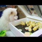 「かわいい犬」初めて他の子動物に会った犬の反応・新しい友達できて超嬉しそう
