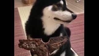 ドン引きする犬