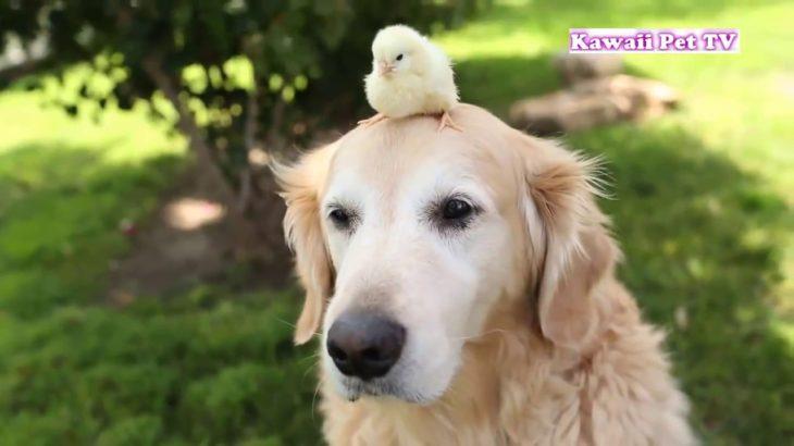 「かわいい犬」初めて他の子動物に会った犬の反応・新しい友達できて超嬉しそう #1