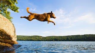 「犬感動」子犬を必死で守る母犬・命をかけて子犬を助けに行く母犬・人間より動物の方が母性本能高い