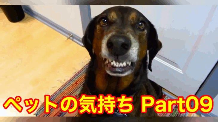 【爆笑!】イタズラばれたペット達!可愛すぎ!チクられびっくりする犬たち
