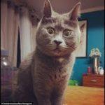 【猫びっくり】飼主の足がくさいと猫がうったえる・飼い主の足が臭くた猫の反応