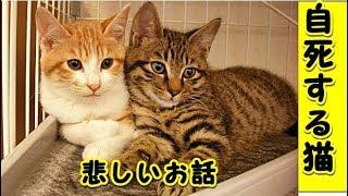 👀【感動 泣ける話】猫の自殺・あまりにも悲しいお話・猫の純粋さ情の深さ(猫 感動 泣ける話 保護 涙腺崩壊 感涙 動物 動画 里親)招き猫ちゃんねるル