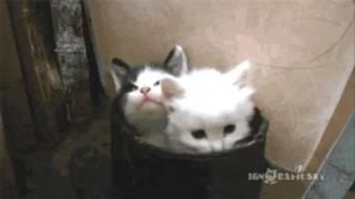 【Gif動画】ほのぼのオモシロ動物GIFアニメをまとめてみたwww
