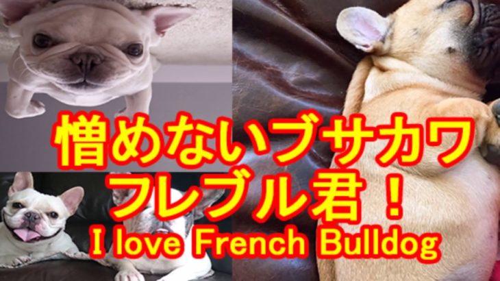 可愛い、おもしろい、ブサカワ フレンチブルドッグの動画。【かわいい、面白、驚き、ブサカワ犬猫動画】