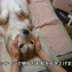 【犬のおもしろ動画】わんこの劇的ビフォアフター Esthetic of a dog