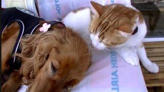 犬の頭の匂いを嗅いだ猫の反応がww Funny Surprised Cat