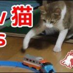 猫vsプラレールの戦い。プラレールにどう反応するか?【猫おもしろかわいい】Ai vs Pra-rail.