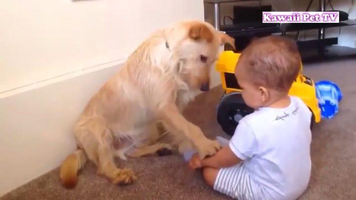 「かわいい犬」初めて人間の赤ちゃんに会った犬の反応が超面白い #2