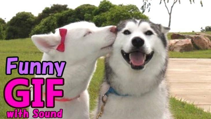 【面白い 映像 GIF】ミラクルで笑える!珍プレー好プレー!? おもしろい人や動物たちの爆笑GIF動画特集 第1弾!! Best of  Funny Videos #14