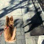 散歩中ずーとジャンプする犬。