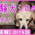 【動物実験】 実験犬シロのねがい – 泣ける話
