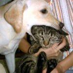 おもしろい犬 フォトムービー funny dogs