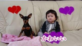 赤ちゃんと犬の反応がかわいすぎて超癒される