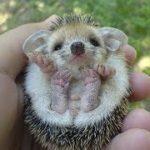 世界最もかわいい動物の赤ちゃん特集・見てていい気持ちになる