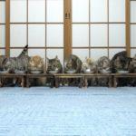 食事中にびっくりして逃げる猫たち